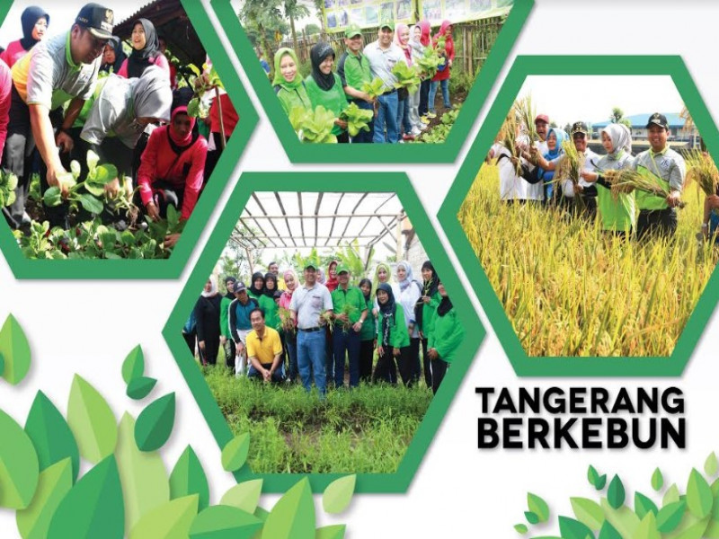 kecamatan-tangerang-gencarkan-urban-farming