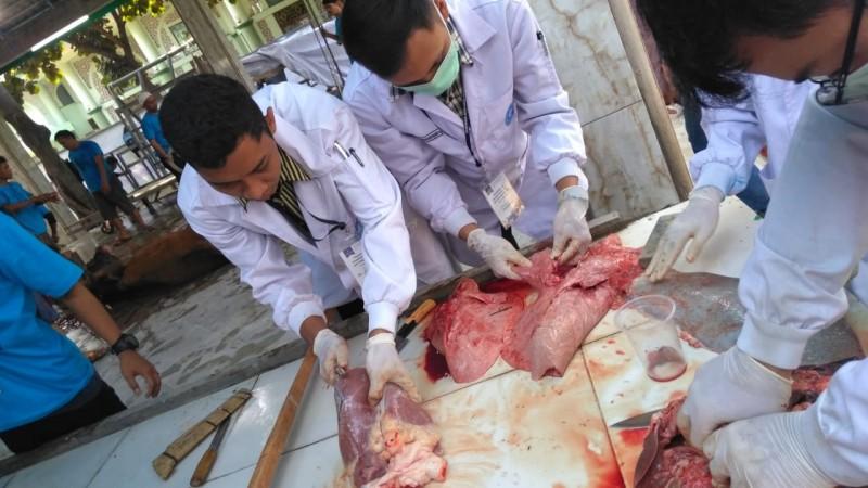 tim-dokter-ipb-daging-kurban-masjid-al-azhom-layak-konsumsi
