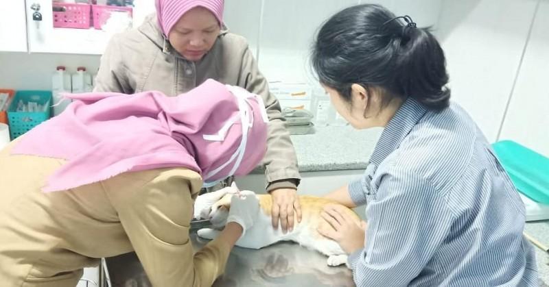 cegah-rabies-dkp-lakukan-vaksin-gratis
