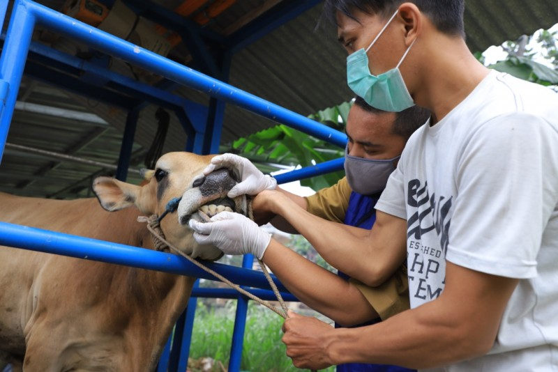 prosedur-potong-hewan-kurban-di-tengah-pandemi