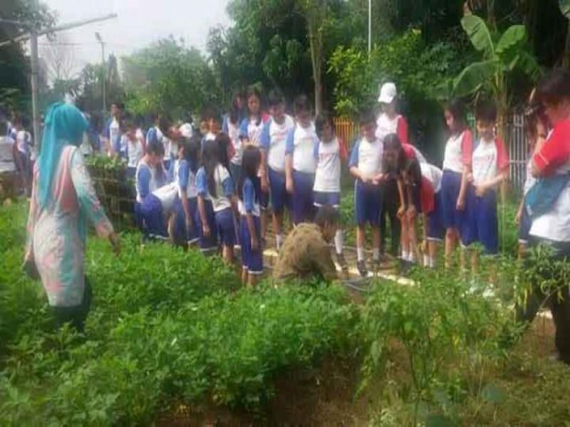 ratusan-pelajar-belajar-menanam-di-kwt-mawar-berseri
