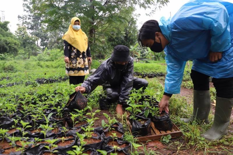 dkp-terus-distribusikan-bantuan-tanaman-produktif